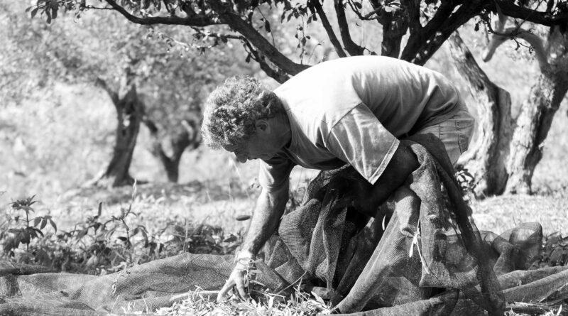 La nuova campagna olivicola